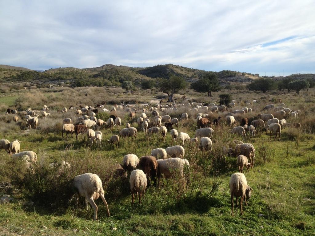 sendero_puntes_gosalvez_campello_Alicante_Costablanca