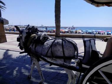 Paseo en Carros hasta la Playa - Fireta de Sant Jaume - El Campello
